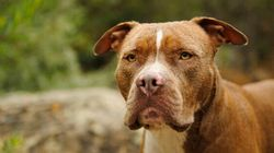 La SPCA de Montréal poursuit la Ville en lien avec le règlement sur les