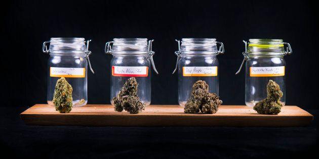 Les producteurs de cannabis font des recommandations sur la publicité du