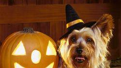 Des chiens déguisés pour l'Halloween