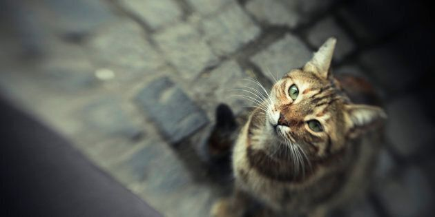 Un chat errant peut-être à l'origine d'une «tentative de