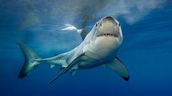 Un jeune homme est tué par un requin à