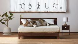 Des lits et des canapés pour