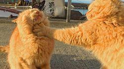 Ces chats en chicane ont captivé la