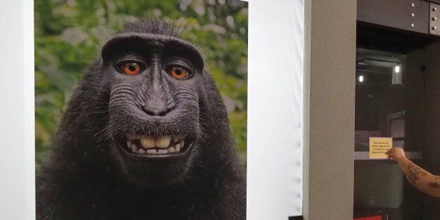 L'égoportrait devenu viral est maintenant affiché au Musée des selfies à Glendale en
