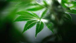 Légalisation du cannabis: vote en Chambre lundi; Ouellet interpelle le