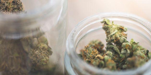 Le marché noir de la marijuana récréative est bien organisé au
