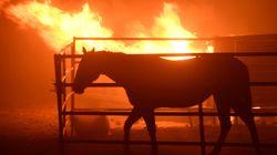 La Californie de nouveau la proie de flammes