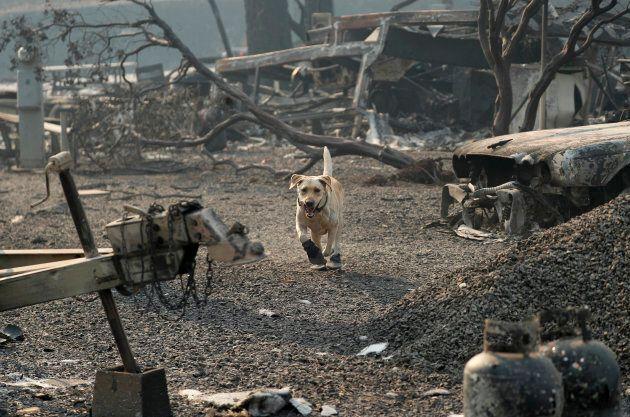 Un chien de secours à la recherche de restes humains au Camp