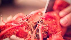 La Suisse interdit de bouillir les homards vivants et d'empêcher un chien