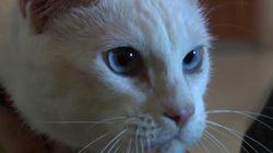Voici Achille, le chat sourd pronostiqueur officiel de la Coupe du monde de