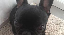 Un chien meurt après avoir été placé dans le compartiment de rangement supérieur d'un