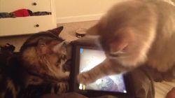 Ce chat est un pro des jeux