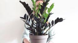 7 plantes d'intérieur pas