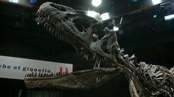 Des dinosaures vendus aux