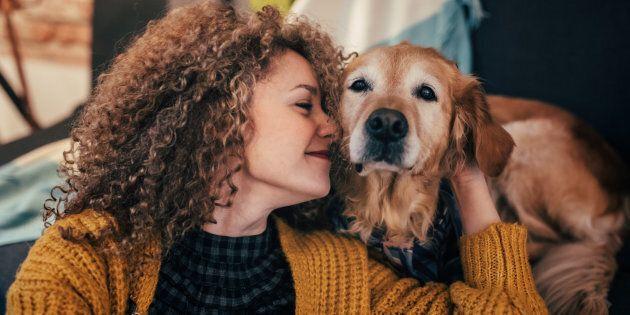 Les jeux video pourraient aider les chiens à rester