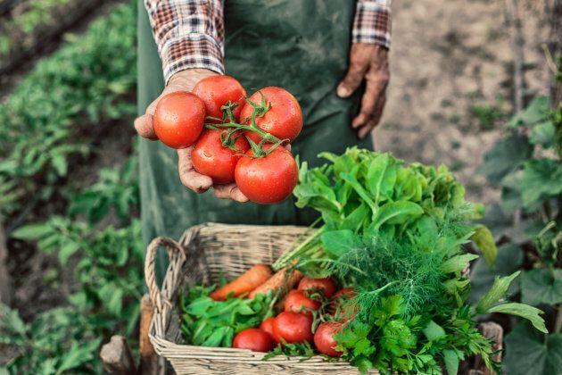 L'agroécologie est la solution pour sauver la planète, selon