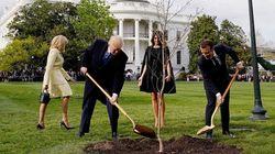 Mais où est passé l'arbre planté par Trump et