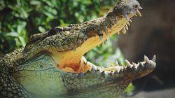 Un crocodile lui dévore un bras, elle se marie à