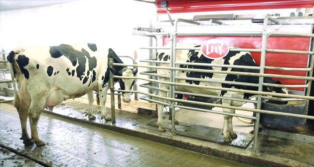 Au besoin, les vaches se présentent au robot de