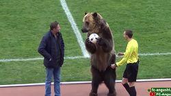 Un ours forcé de jouer les mascottes pour un match de