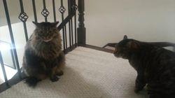 Quand les chats montent la garde, le chien ne passe