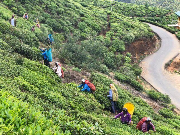 Sri Lanka: visiter les régions de Colombo, le centre et le sud du