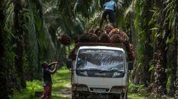 L'huile de palme durable, une