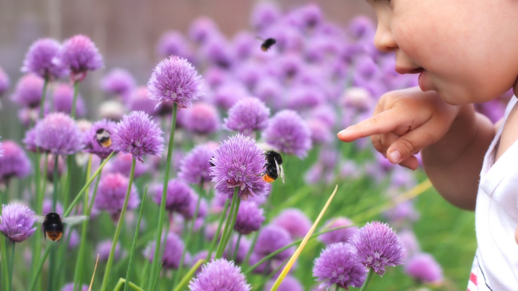 How To Help Insects This Summer – And Start Averting Ecological Disaster