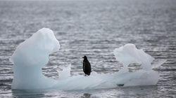 En Antarctique, la glace fond encore plus