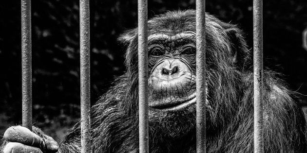 C'est quoi le problème avec les zoos? Ce sont des cages pour vous