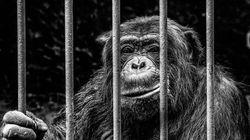 BLOGUE C'est quoi le problème avec les zoos? Ce sont des cages pour vous