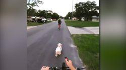 Promener son chien à vélo n'est pas sans