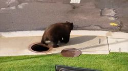 Les images impressionnantes d'un ours qui sort des