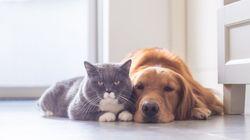 Les chiens et les chats sont-ils