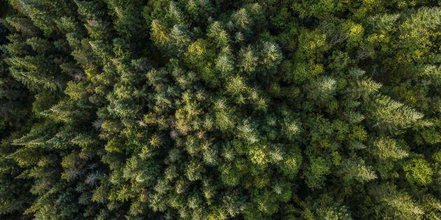 Les espaces sauvages sont encore d'une superficie impressionnante, mais nous n'en protégeons pratiquement...