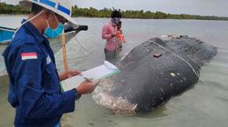 Près de 6 kilos de plastique dans l'estomac d'une baleine