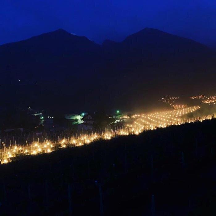 I vigneti dell'Alto Adige illuminati da migliaia di candele contro il gelo di