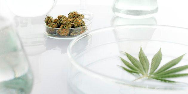 L'Université du Québec à Trois-Rivières accueillera le premier profil universitaire «cannabis» au