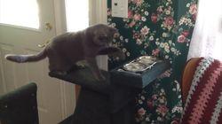 Ce chat ne fait même pas confiance à son bol