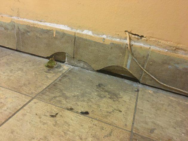 Des trous parsèment le bas du mur d'un logement de Côte-des-Neiges infesté par des souris.