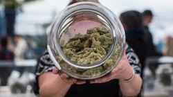 Le cannabis en vedette à