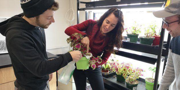 Des élèves apprennent à bien faire pousser des plants de coléus, semblables à des plants de cannabis.