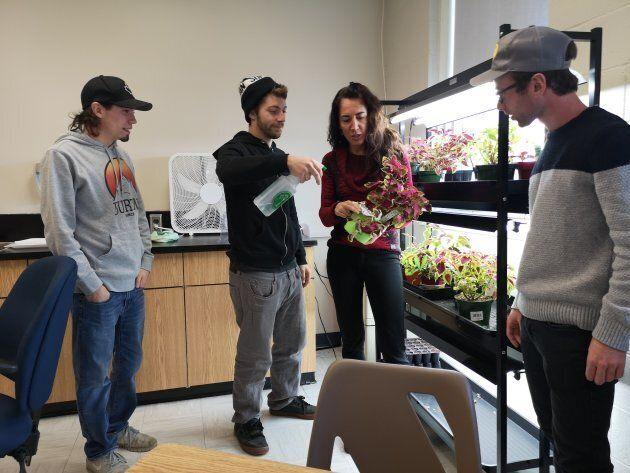Contourner la loi? Que nenni. Le Collège communautaire du Nouveau-Brunswick s'est associé à des entreprises de cannabis médicinal pour offrir des stages à leurs étudiants.