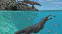 Un nouveau spécimen de baleine à quatre pattes
