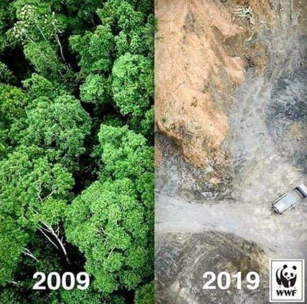 Depuis 10 ans, la déforestation de l'Amazonie n'a pas cessé.