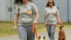 Des chiens en prison pour lutter contre le