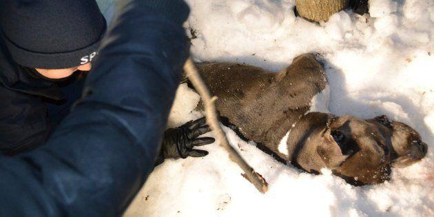 Un chien retrouvé mort attaché à un arbre dans le parc Angrignon à