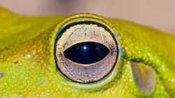 Une grenouille vivante se cachait dans... des feuilles