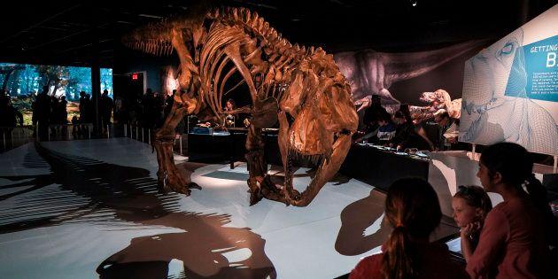 Le T-Rex était encore plus gros que ce qu'on