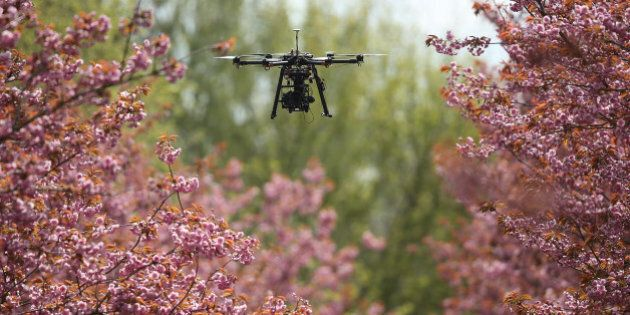 BERLIN, GERMANY - APRIL 20:  A photographer's drone flies among blossoming cherry trees on April 20, 2017 in Berlin, Germany. Farmers are concerned that a recent cold snap that brought snow flurries to Germany, including Berlin, yesterday has damaged cherry trees and other fruit-bearing trees.  (Photo by Sean Gallup/Getty Images)